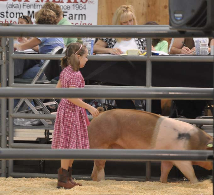 7150 sarah morali Larimer County Fair 4 H Stock Sale