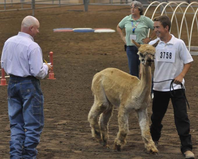 6974 mat and alpaca Larimer County Fair Photos Review