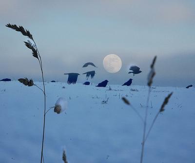 10feb28 430 Earthsky Tonight   Feb 28, 2010: Full moon comes February 28