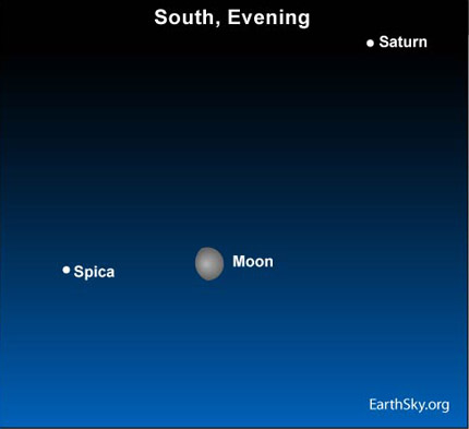 10may23 4301 Earthsky Tonight   May23: Moon leaving Saturn, approaching Spica