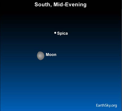 10may24 4301 Earthsky TonightMay 24: Bright star near moon is Spica 