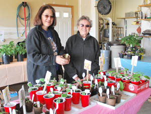 Mary Ann Edna Buy a plant, help a child