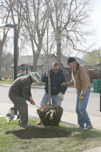 Planting Alexs Tree sm Arbor Day Tree Planting in Berthoud—May 1, 2010