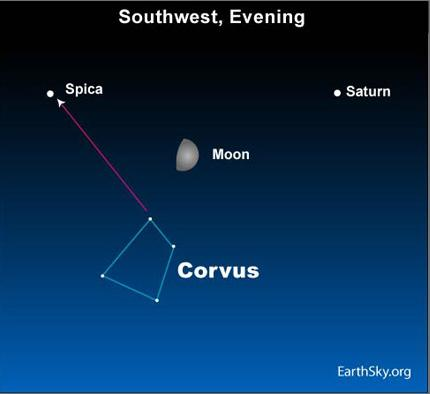 10jun19 4301 Earthsky TonightJune 19   Waxing moon between Saturn and Spica  