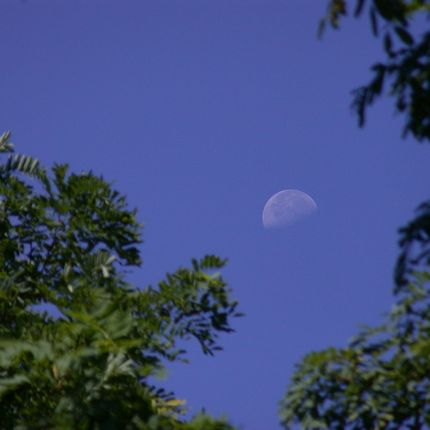 daytime moon 430 Earthsky Tonight—June 28:Look for daytime moon each morning this week