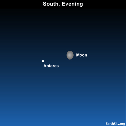 10july20 430 Earthsky Tonight—July 20, Moon and Antares cross the sky together