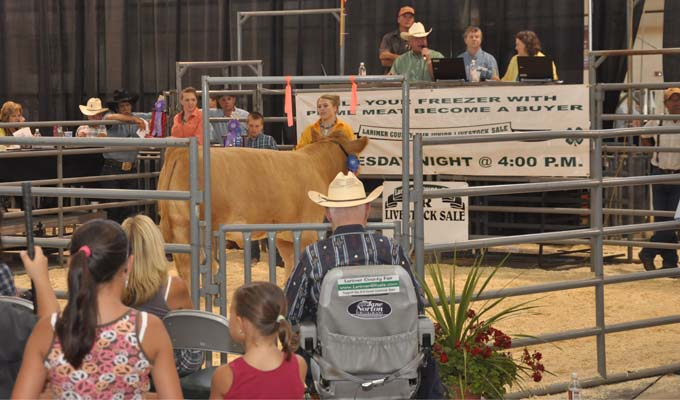 Grand Champion Market Beef Larimer County Fair 4 H Stock Sale