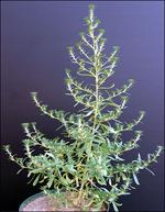 Master Gardener: Top 10 weeds | Recorder Online