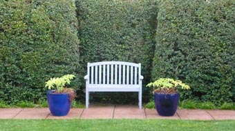Formal hedges with bench by Dick Christensen1 Master Gardeners, hedges to grasshoppers (again)