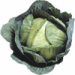 Crisp Colorado cabbage adds crunch