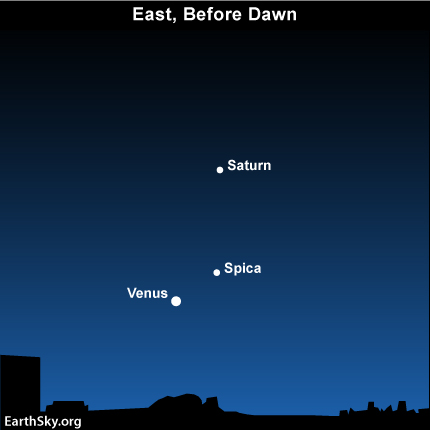 10nov24 430 EarthSky Tonight—Nov 24,Venus getting brighter in the predawn sky