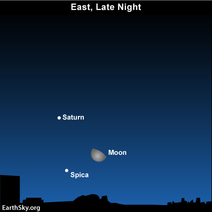 24jan2 Sky Tonight—January 24, Moon, Saturn, Spica from midnight until dawn