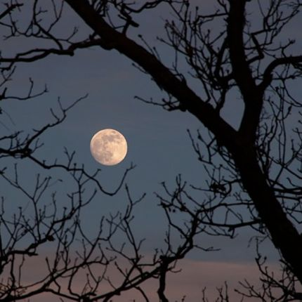 wolf moon dan bush Sky Tonight—January 19, Full moon rises in east around sunset