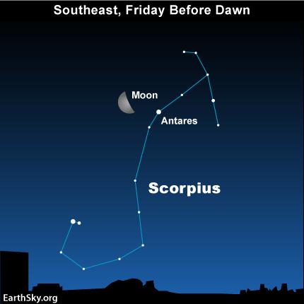 feb24 Sky Tonight—Feb 24, Moon by Scorpion's Heart before dawn