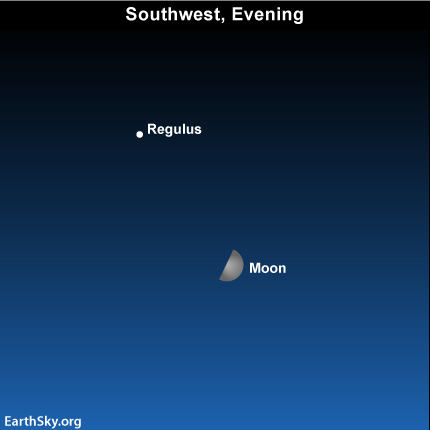 "may10 Sky Tonight—May 10, First quarter moon shows a ""flat"" edge"