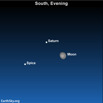 may13 Sky Tonight—May 13, Moon near golden Saturn