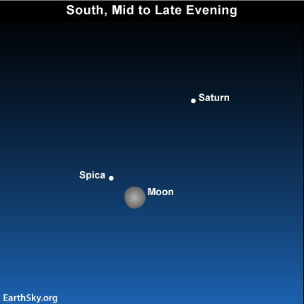 may14 Sky Tonight—May 14, Bright star near moon is Spica