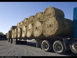 Colorado hay crisis and help for horses