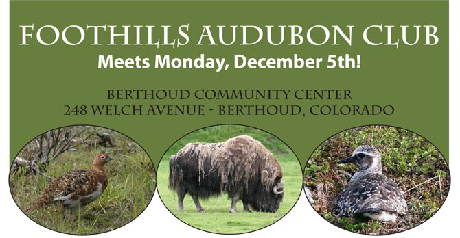 FAC.Dec  Foothills Audubon Club Dec 5