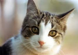 Kidney Disease in Cats and Dogs