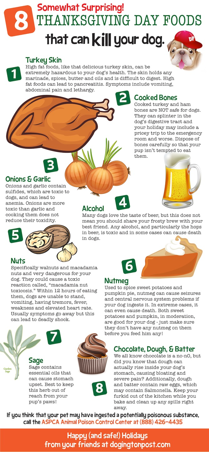 Txgvng info Thanksgiving Day Foods That Can Kill Your Dog