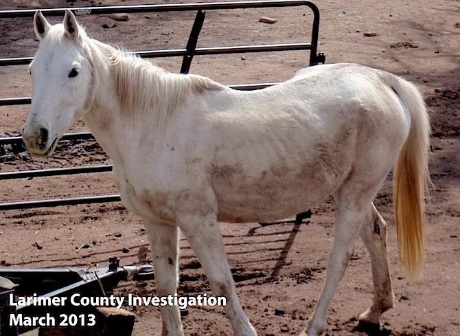 White horse seized