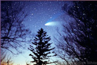Comet thru trees January Star Night at the LTO