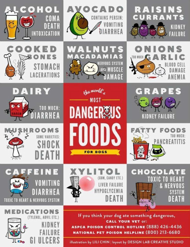 Dangerous dog foods poster