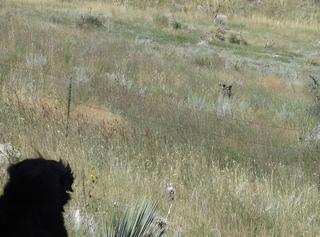 Bear filmed near Berthoud area home