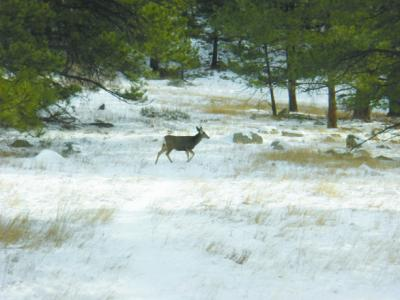 VAR Heil.deer DC.tif0035 Outdoors Near Your Backdoor:  Not Far from Berthoud, Heil Valley Ranch is a Great Escape