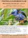 Audubon December 2016 Meeting